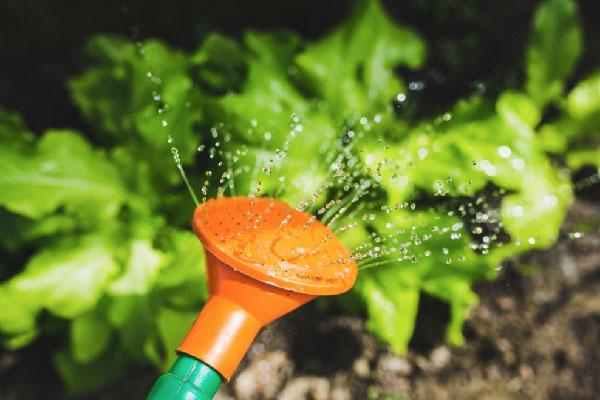 prodotti home garden fertilizzante